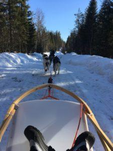 Husky sleigh